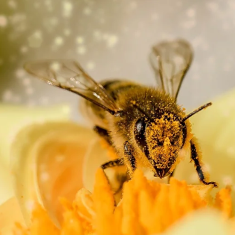 Auto,Biene,Wespe,Insekt,Bienen,Wespen,Insekten,Unfall durch Bienen im Auto,Unfall durch Wespen...png