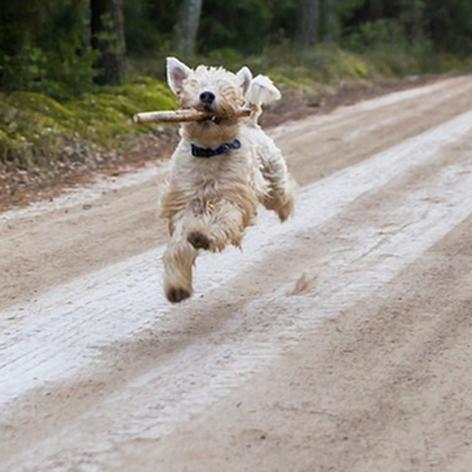 Haustier überfahren,Tier überfahren,kleines Waldtier überfahren,Tier im Wald überfahren,Hausti...png