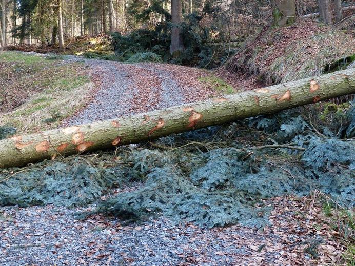 Schaden durch Baum,Baum auf Straße,Wer zahlt bei Schaden durch Baum auf Straße,Schadenersatz b...png