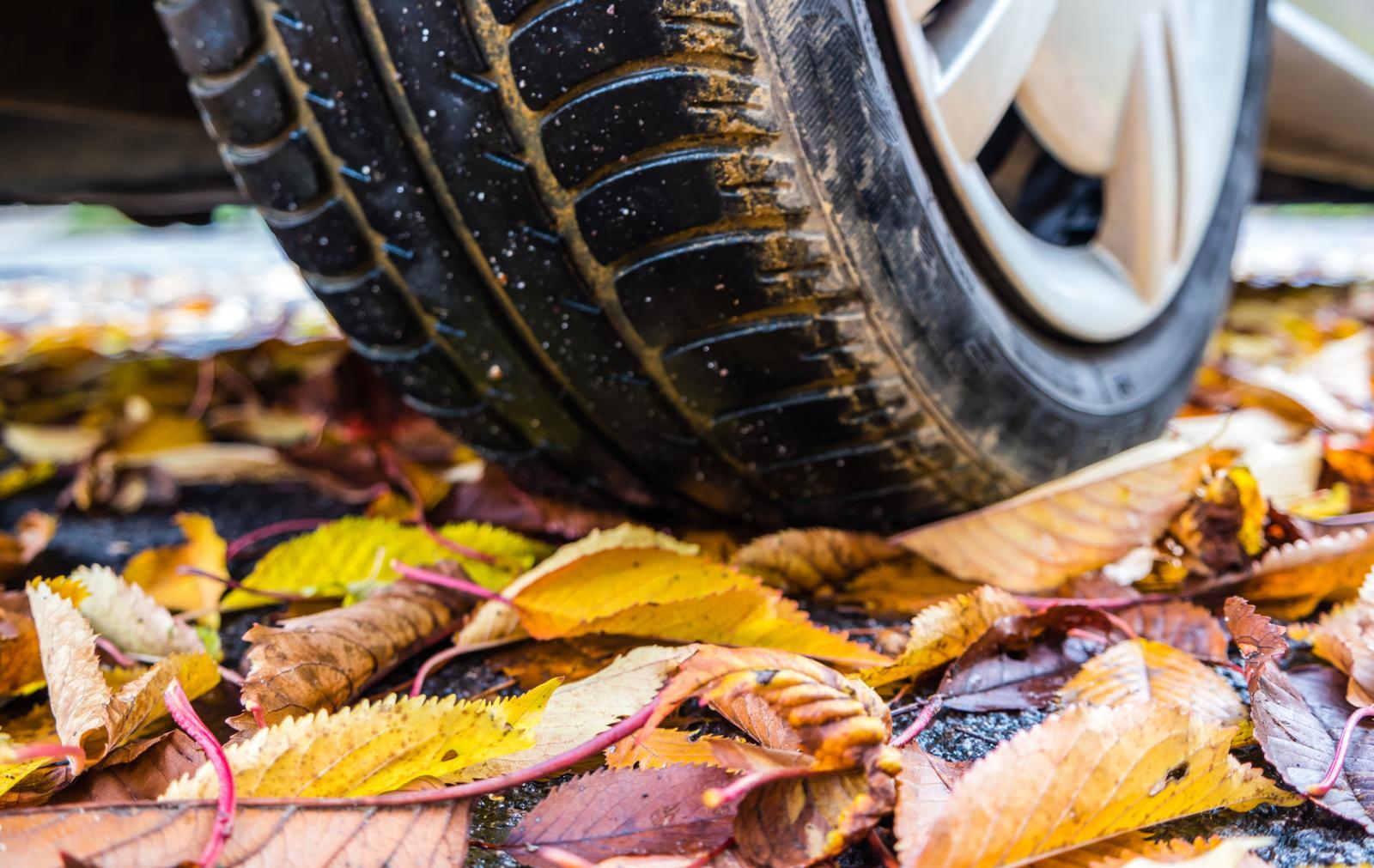 Reifen-Herbst-animaflora-–-fotolia.jpg