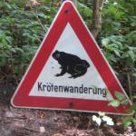 Vorsicht Krötenwanderung! Darauf sollten Motorrad- und Autofahrer bei Krötenwanderung achten!